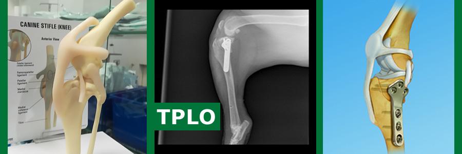 Hirurška sanacija prekida prednjeg ukrštenog ligamenta (TPLO)